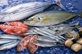 活鱼检测出孔雀石绿,你还敢吃吗?
