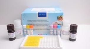 羊源性恒温核酸检测试剂盒